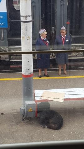 Transmongolië Express, Provodnik, Backpackjunkies