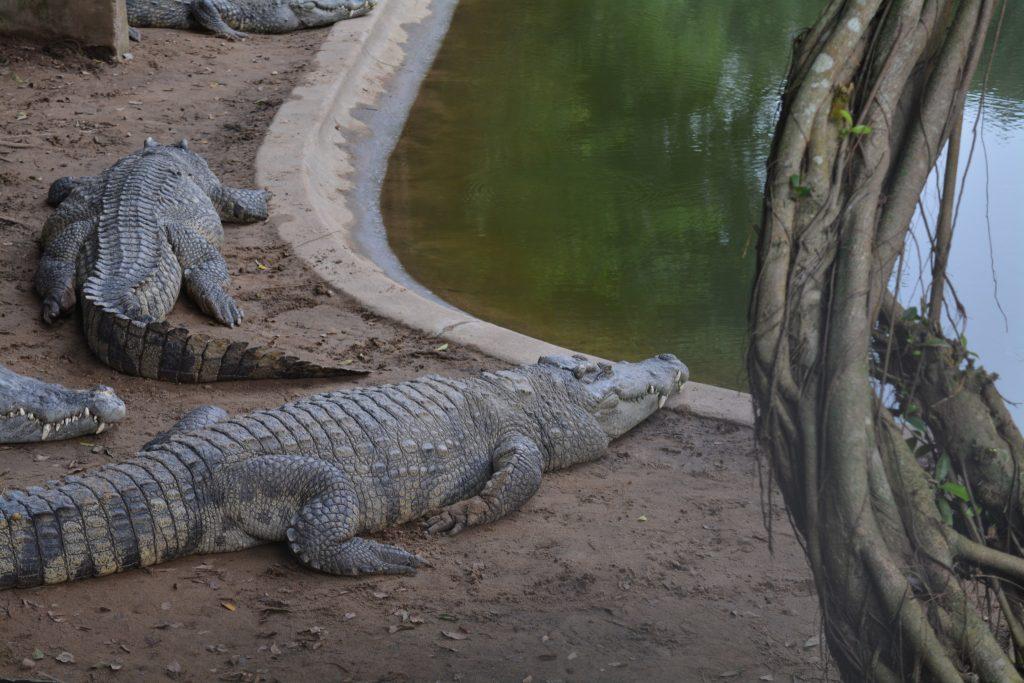 Mekond Delta, Long Xuyen, Crocodile Farm, Backpackjunkies
