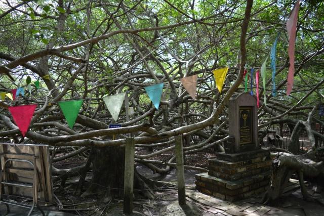 Mekong Delta, tempel, heilige boom, Backpackjunkies