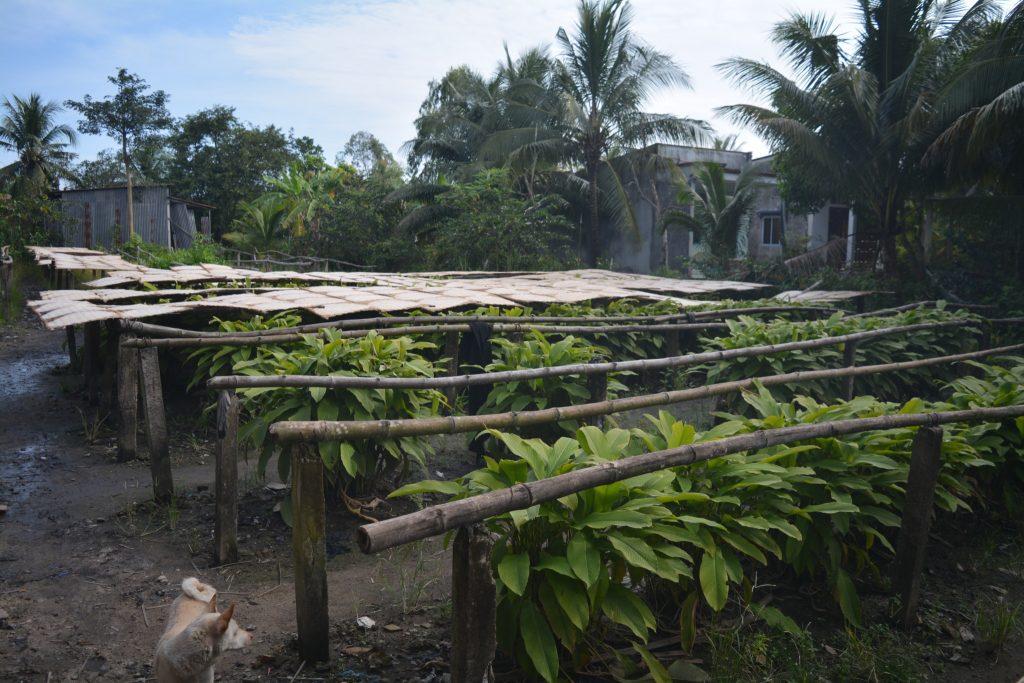 Mekong Delta, Rice Noodle Workshop, Backpackjunkies