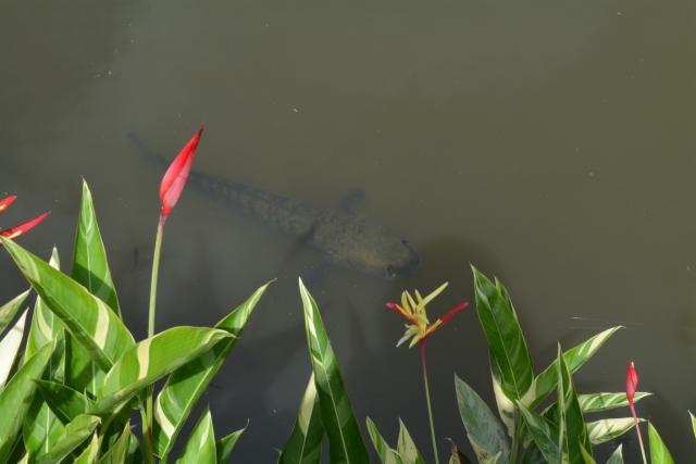 Singapore, Botanic Gardens, Symphony Lake, Backpackjunkies