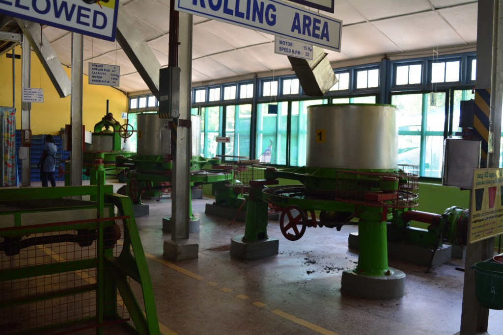 Kandy, Haputale, Blue Field Tea Factory, Backpackjunkies