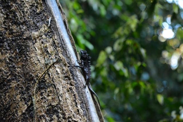 Mulu National Park, Canopy Walk, Backpackjunkies
