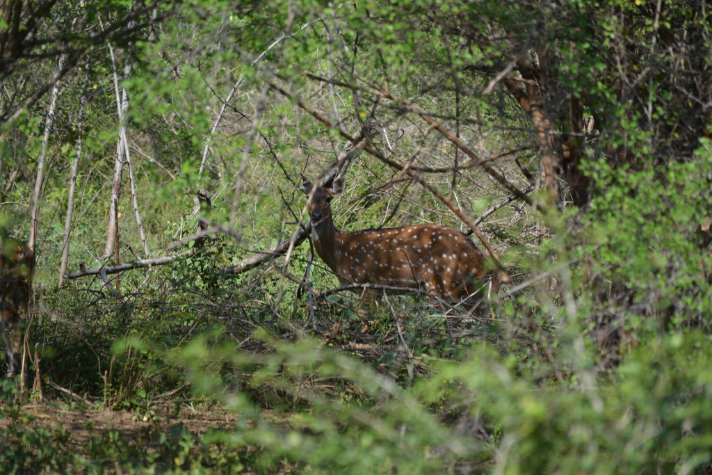 Udawalawe National Park, Backpackjunkies