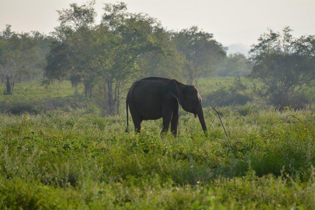 Udawalawe National Park, olifant, Backpackjunkies