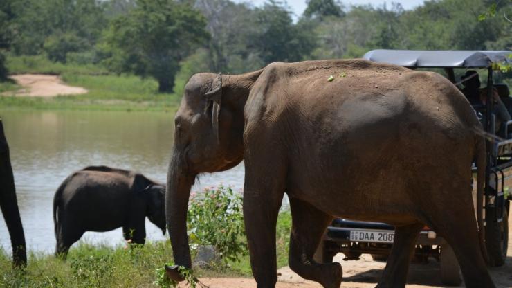 Udawalawe National Park, olifanten, Backpackjunkies