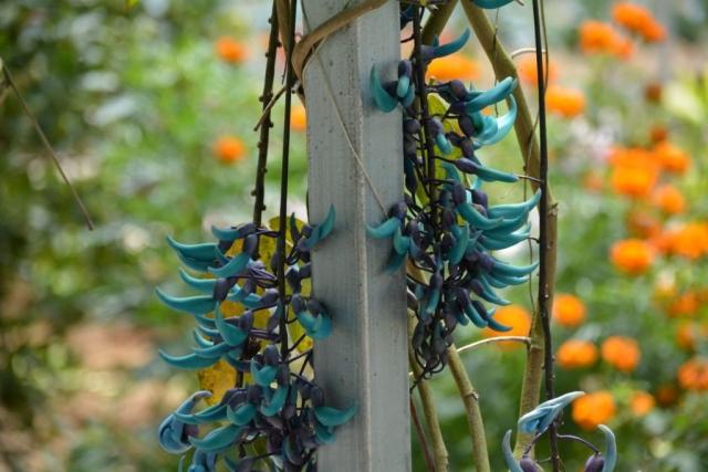 Cameron Highlands, Butterfly Garden, Backpackjunkies