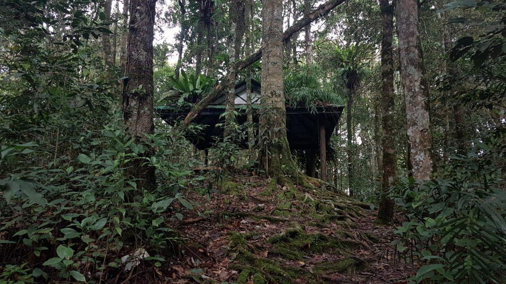 Cameron Highlands, Trail 5, Backpackjunkies