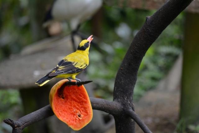 Kuala Lumpur Bird Park, exotische vogels, Backpackjunkies