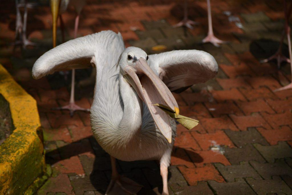 Kuala Lumpur Bird Park, Free Flight Aviary, Backpackjunkies