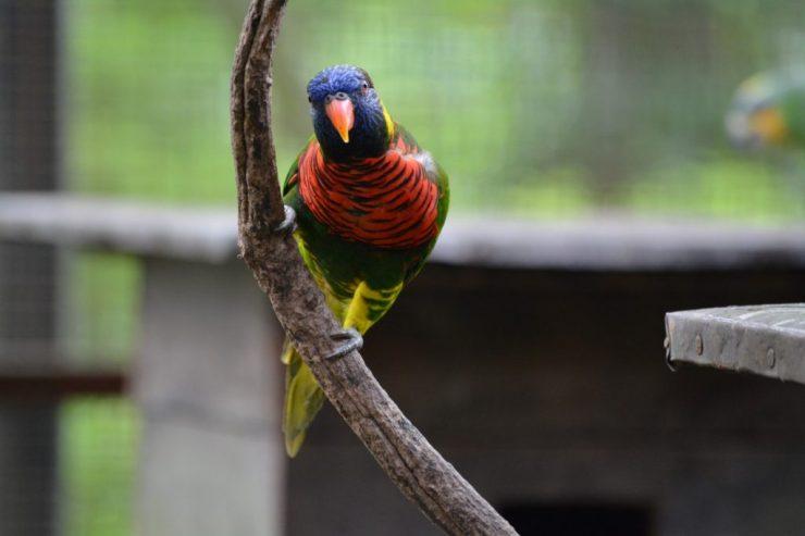 Kuala Lumpur Bird Park, papegaai, Backpackjunkies
