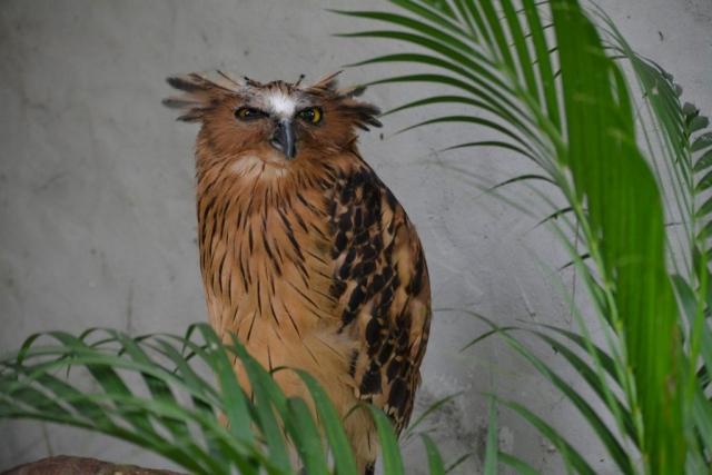 Kuala Lumpur Bird Park, uilen, Backpackjunkies