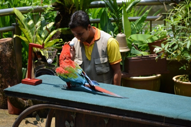 Kuala Lumpur Bird Show, vogelshow, Backpackjunkies