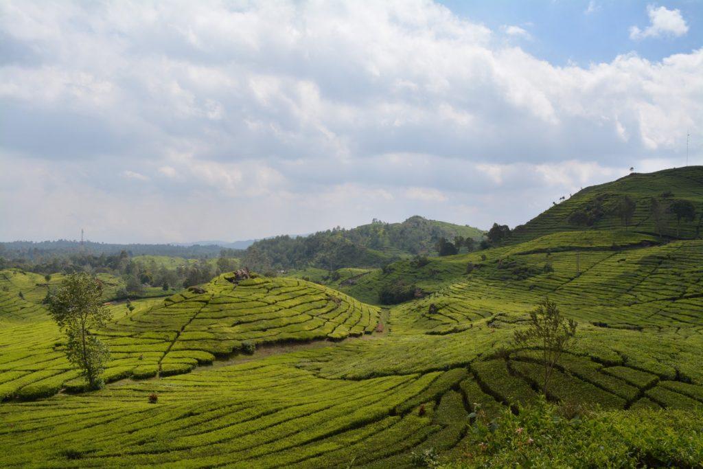 Bandung, Kawah Putih, Kawah Rengganis, theeplantage, Backpackjunkies