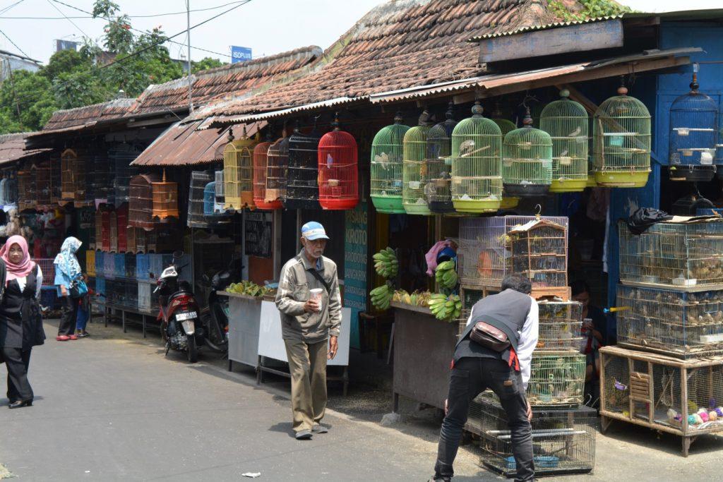 Malang, Bird Market, Backpackjunkies