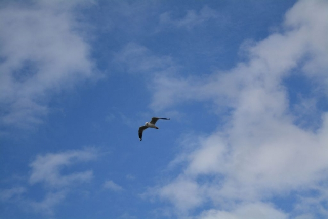 Phillip Island - Kusten 14 - BackPackJunkies