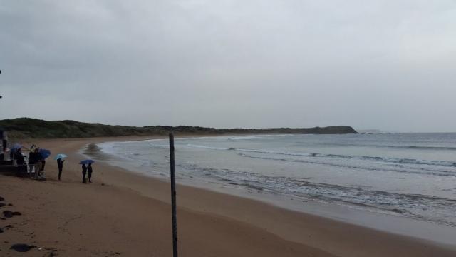 Phillip Island - Pinguins 04 - BackPackJunkies