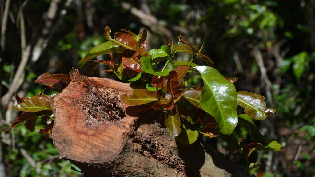 Everglades - Mahogany Hammock Trail 04 - BackPackJunkies
