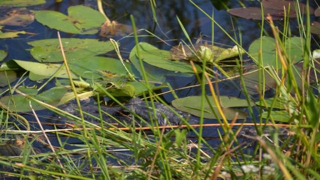 Everglades - The Anhinga Trail 01 - BackPackJunkies