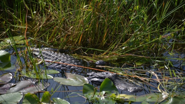 Everglades - The Anhinga Trail 03 - BackPackJunkies